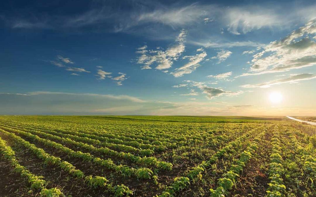 Developing Nations' Demand for Safer Pesticides Drives Higher Adoption of Biopesticides